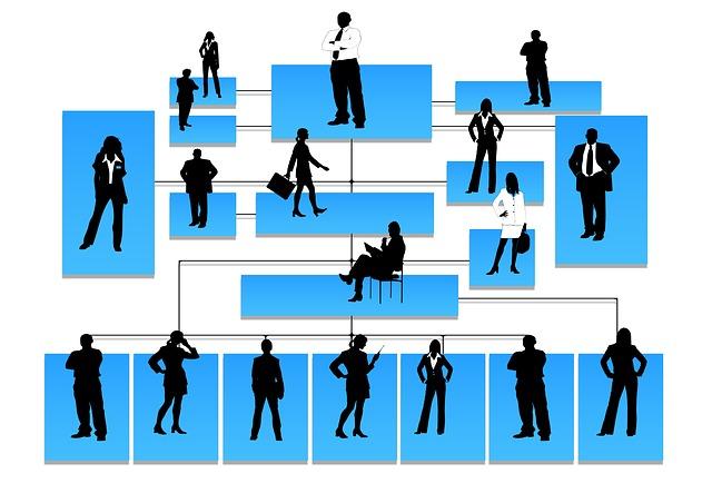 Organisation hierarchique et division du travail